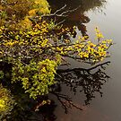 Fagus Reflections by tinnieopener
