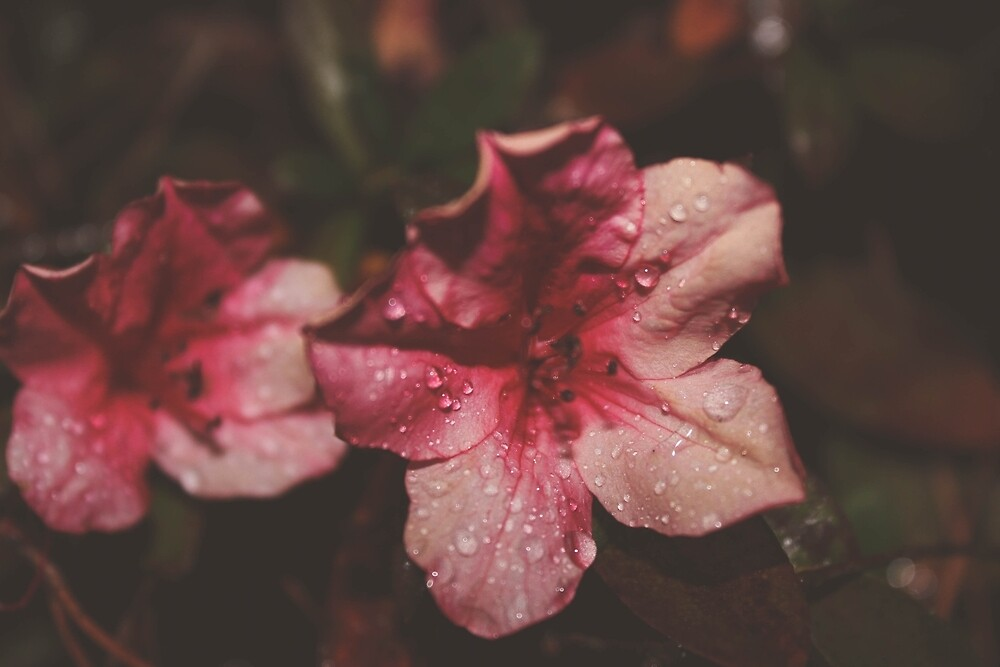 Shimmery Pink Flower by yasminsphotos
