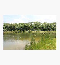 Lakeside Cane Photographic Print