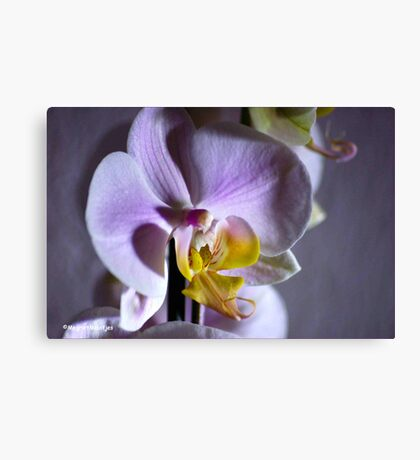 JUST AN ORCHID - NET 'N ORGIDEE Canvas Print