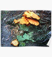 Humungous Fungus Poster