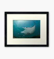 Manta Ray Show Framed Print