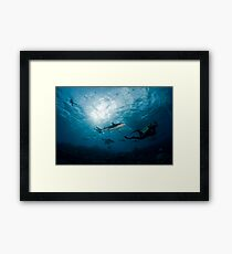 Swimming with Sharks Framed Print