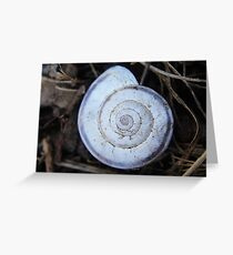 Pretty light grey snail shell Greeting Card