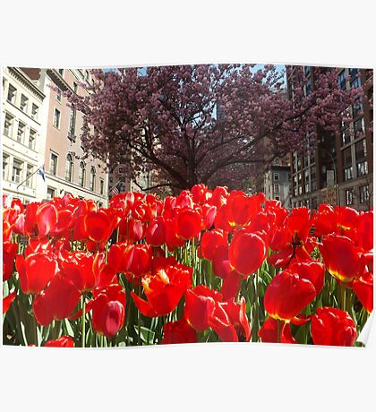 Colorful Tulips, Murray Hill, New York City Poster