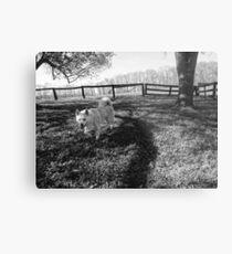 Dog on the Grass Metal Print