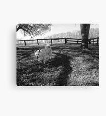 Dog on the Grass Canvas Print