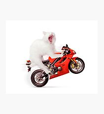 White cat riding motorcycle art photo print Photographic Print