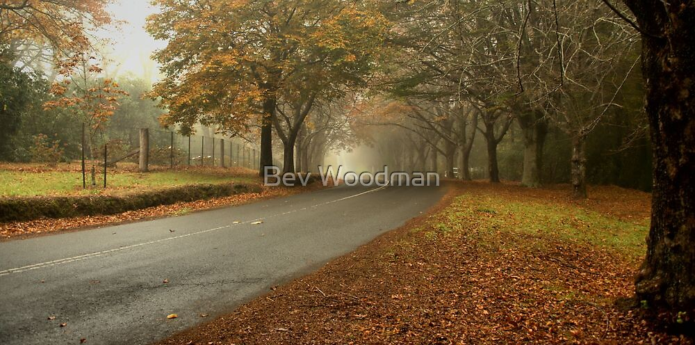 AUTUMN COLOURS MT WILSON NSW  by Bev Woodman