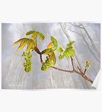 New Leaves and Catkins No.1 Poster