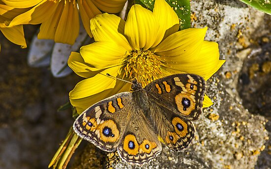 Yellow flower and butterfly by Doug Cliff