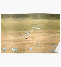 Lake Manyara Egret Poster