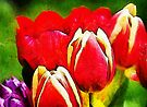 Rainbow Tulips by David Carton
