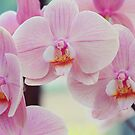 Pretty Elegance. Orchids from Keukenhof. Netherlands  by JennyRainbow