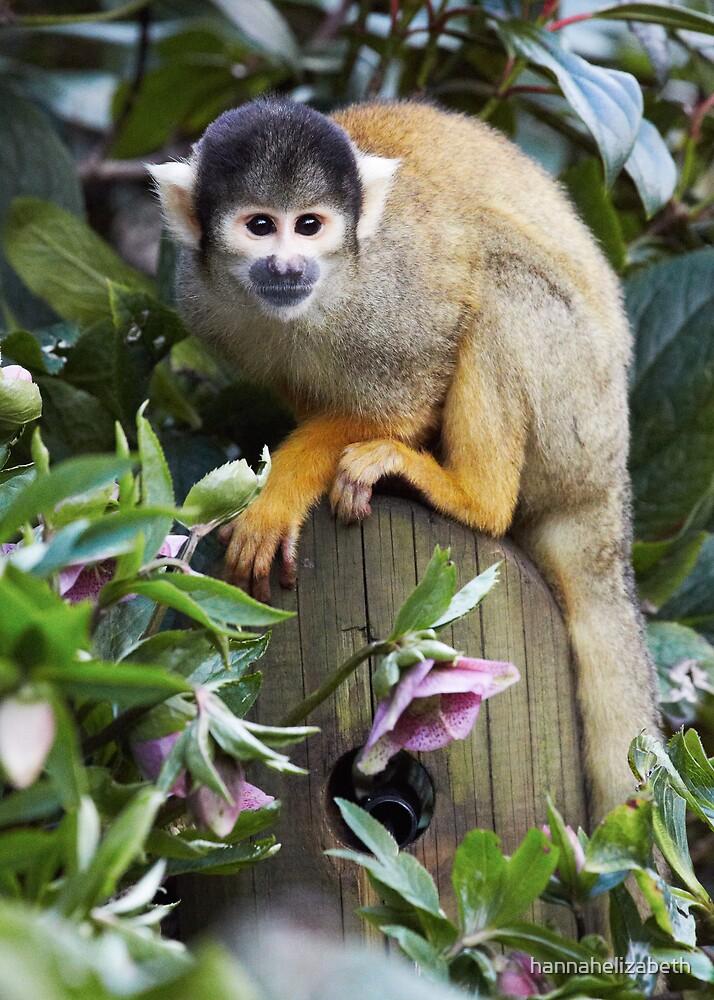 Black-capped Squirrel Monkey by hannahelizabeth