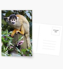 Black-capped Squirrel Monkey Postcards
