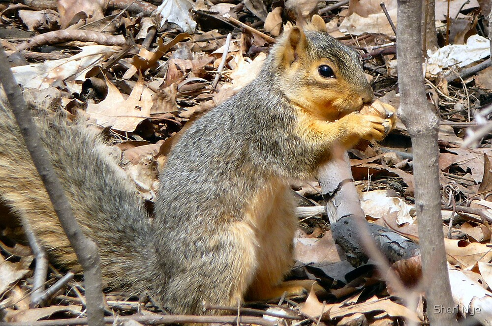 The Squirrel and the Nut by Sheri Nye