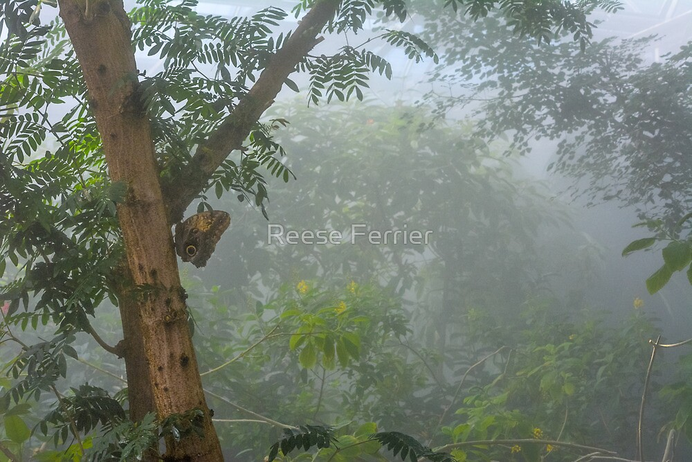Butterfly In the Rainforest by Reese Ferrier