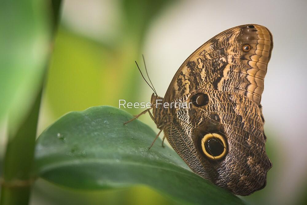Butterfly by Reese Ferrier