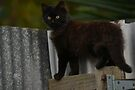 Phantom the little stray cat happy new life  by Jemma Richards