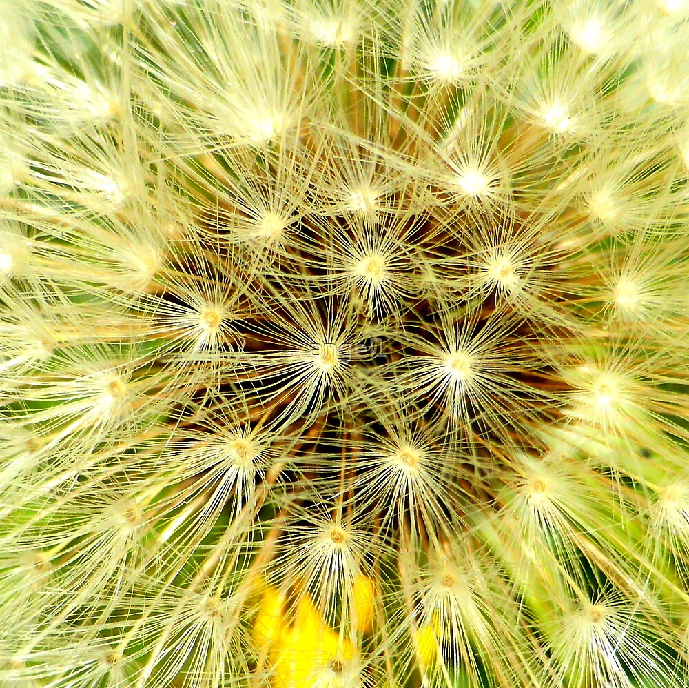 Dandelion Puff by ©The Creative  Minds