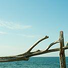Gotland by Bjarte Edvardsen