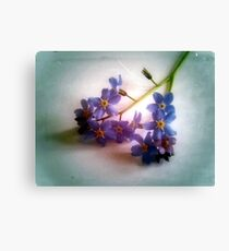 Myosotis 'Forget Me, Not' Canvas Print