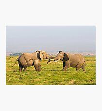 Elephant Fight Photographic Print