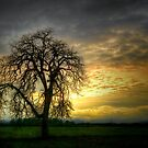 A Wee-Bit of Light ~ Old Oak Tree ~ by Charles & Patricia   Harkins ~ Picture Oregon