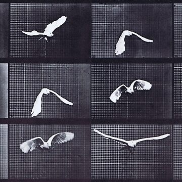 Muybridge Flight Sequence by kbau