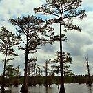 Louisiana Trees 2 by Emily Rose