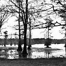 Louisiana Trees 3 by Emily Rose