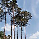 Louisiana Trees 6 by Emily Rose