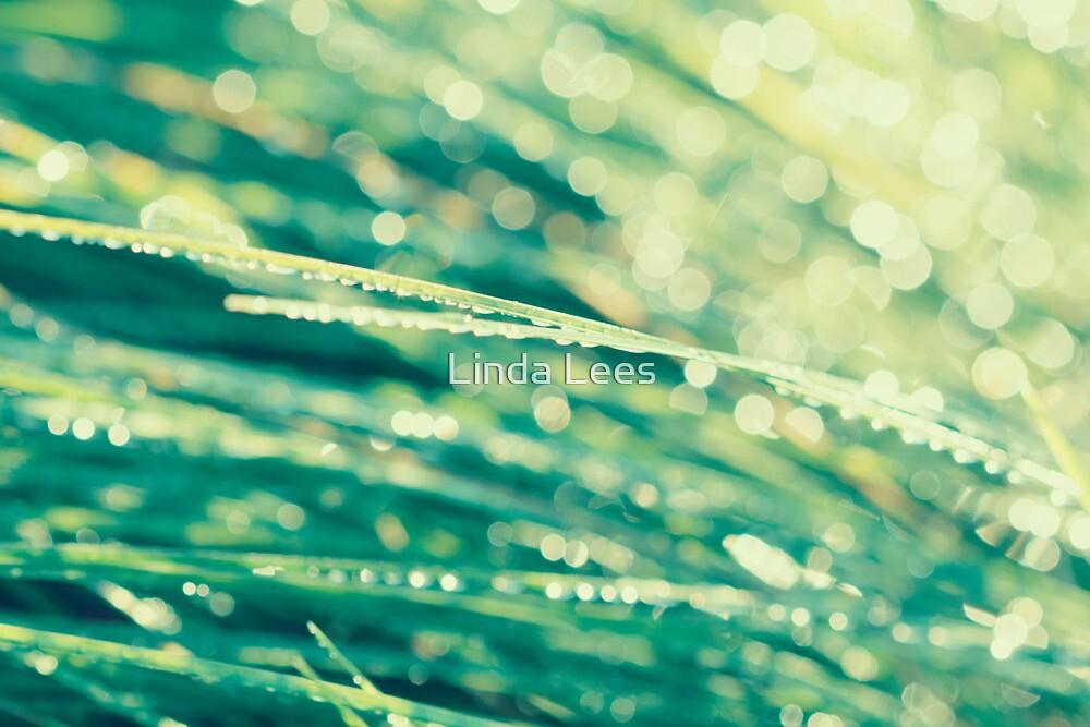 Lemon Drops by Linda Lees