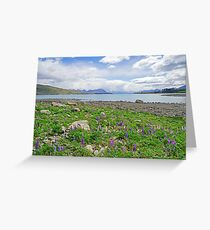 Lupin Dreamtime Greeting Card