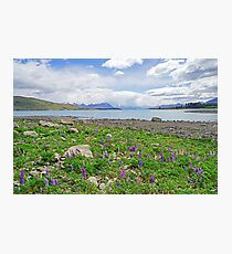 Lupin Dreamtime Photographic Print
