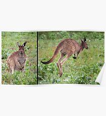 """Western Grey Kangaroo ~ """"Hello and Goodbye"""" Poster"""