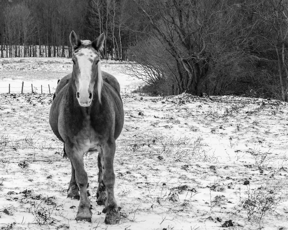First Snow Fall by Frank Kapusta