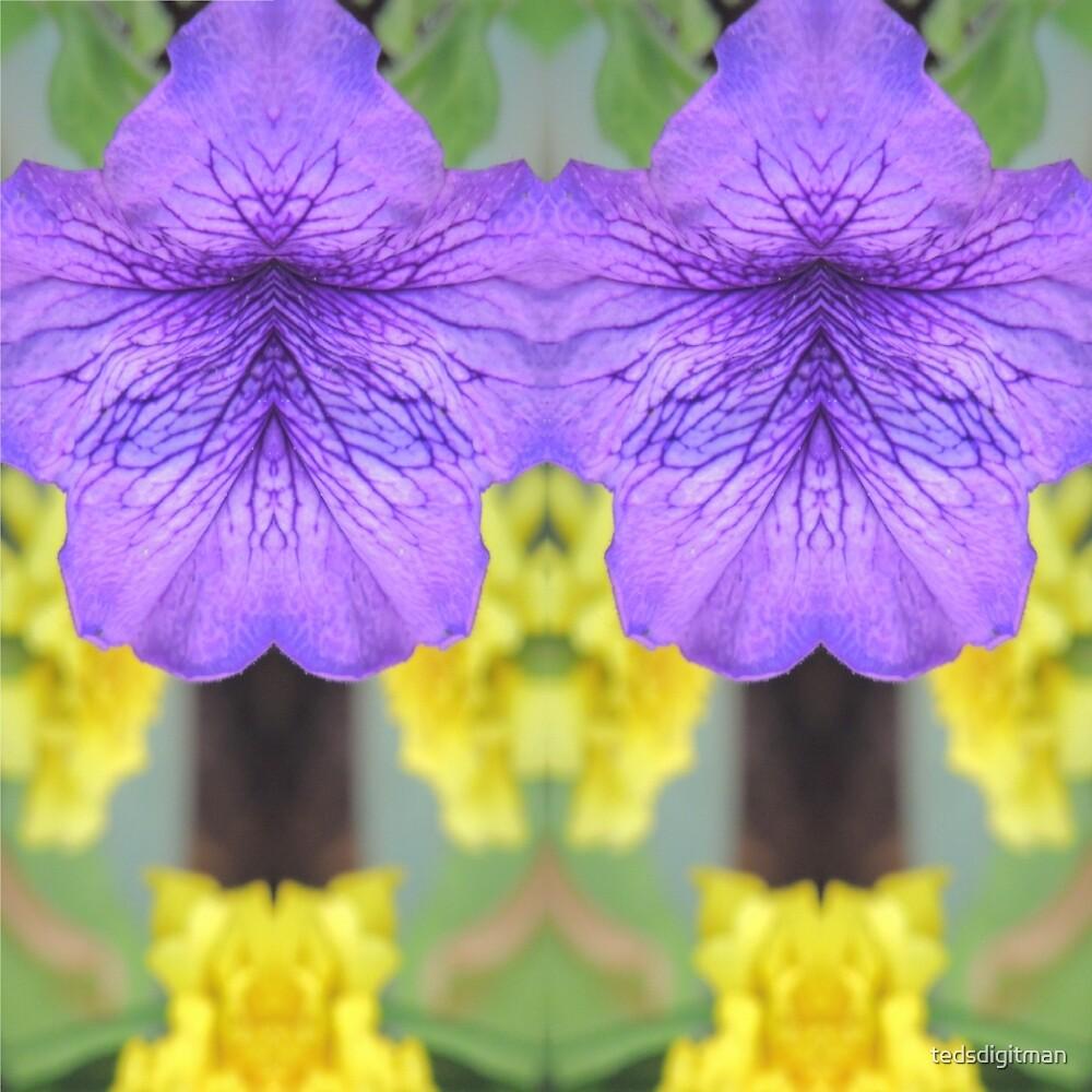 134 Petunia by tedsdigitman