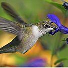 Ruby-throated Hummingbird by jozi1
