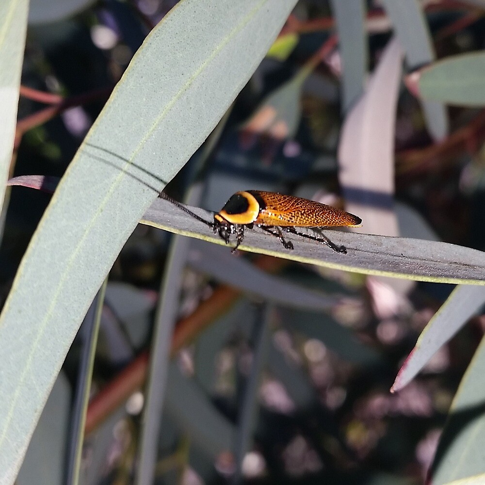 Ellipsidion by threegreenbees