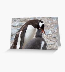"""Gentoo Penguin and Chick ~ """"Pre-packaged Krill"""" Greeting Card"""