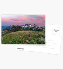 Mazama Ridge Wildflowers Postcards