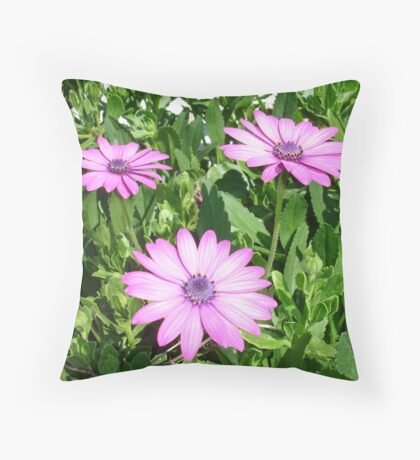 Pink Daisies of Summer Throw Pillow