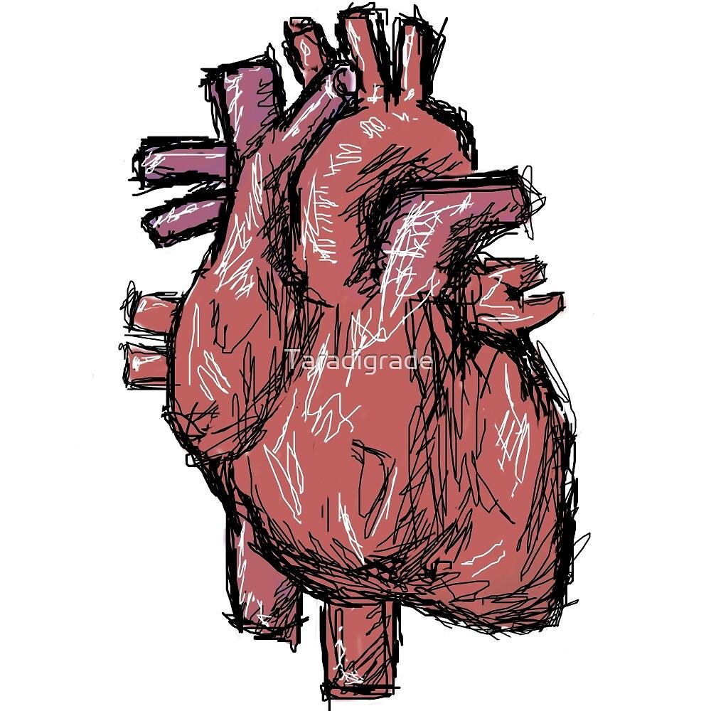 Heart Sketch by Taradigrade