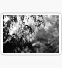Black and White Conifer Tree Sticker