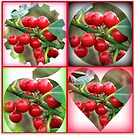 Red Berries Fancy Shapes Collage von BlueMoonRose