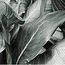 Patterned Leaves by iheartdenver