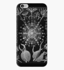 Haeckel Phaeodaria iPhone Case