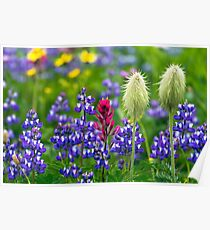 Wildflowers at Mount Rainier Poster